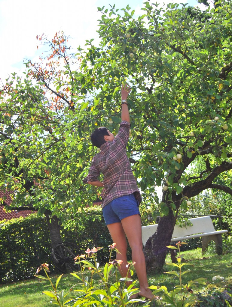 Flannel Shirt Apple Tree